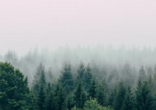 [예스24 에세이 MD 김태희 추천] 식물, 동물, 자연이 들려주는 이야기  | YES24 채널예스