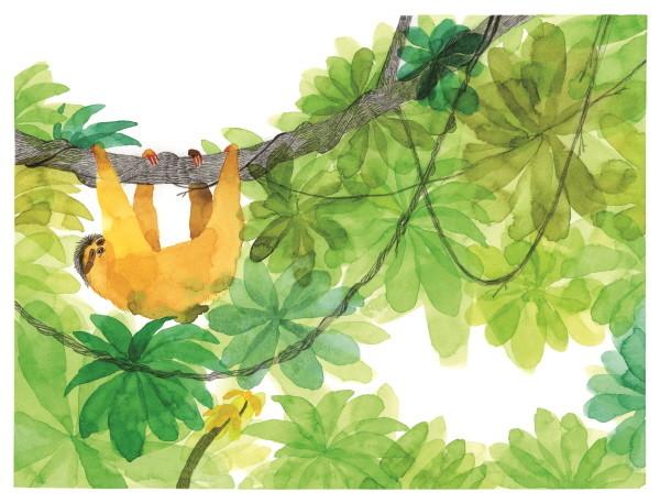 1.나무늘보.jpg