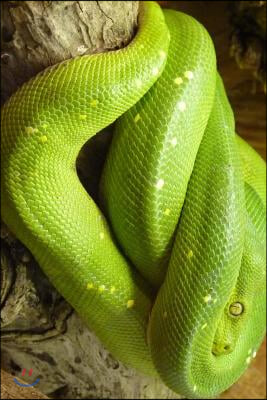 Green Tree Python Curled Up in a Tree Journal: Take Notes, Write Down Memories in This 150 Page Lined Journal