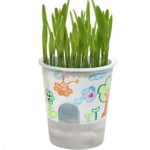 SA 거꾸로 물주기 화분(식물키우기)(보리)(1인용 포장) 과학DIY 과학준비물