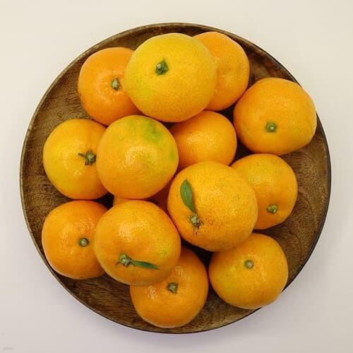 좋은맛 제주 타이벡 감귤 5kg (로얄과)제주도밀감